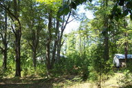 3.5 Ac 9000 Block Billtuckhwy Virgilina VA, 24598