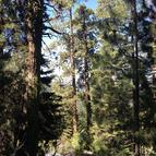 23-Lot Sequoia Drive Camp Nelson CA, 93208