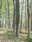 Lot 17 Summerhill Dr Chillicothe OH, 45601