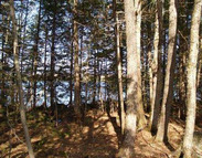 Lot 9 Little River Cover Road Weston ME, 04424