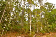 Lot #7 72nd Lane Cedar Key FL, 32625