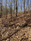 Lot 12  Wild Fern Creek Subdivision Iuka MS, 38852