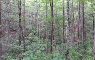 Lot 7 Black Fox Drive Lot 7 Murphy NC, 28906