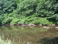 000 Speckled Trout Lane Cullowhee NC, 28723