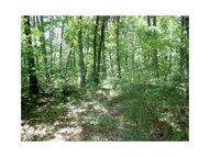 Lot 47 Willow Ln Pineville MO, 64856