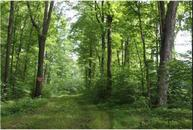 16090 366th St. (Lot 10) Stanley WI, 54768
