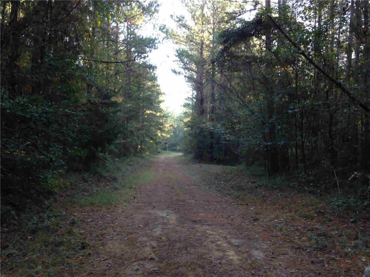 0 Norris Homewood Rd Forest MS, 39074